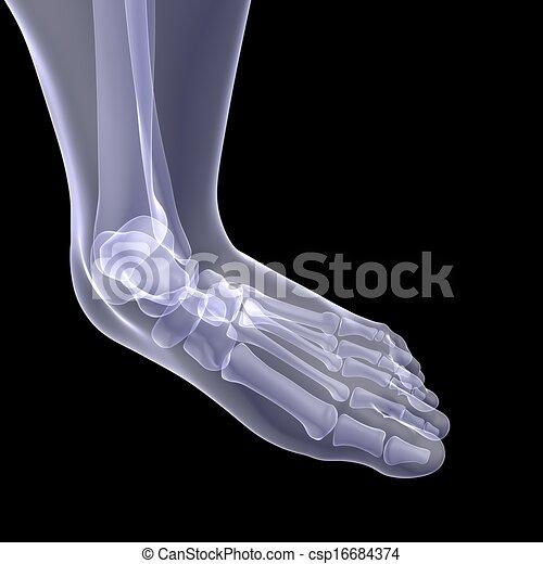 Menschlicher Fuß - csp16684374