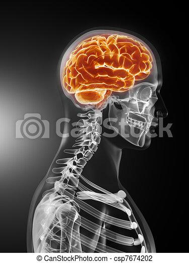 Medizinischer menschlicher Gehirnscan - csp7674202