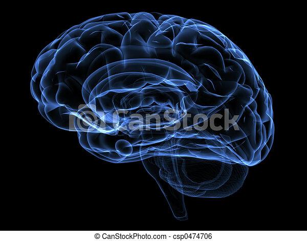 Gehirn - csp0474706