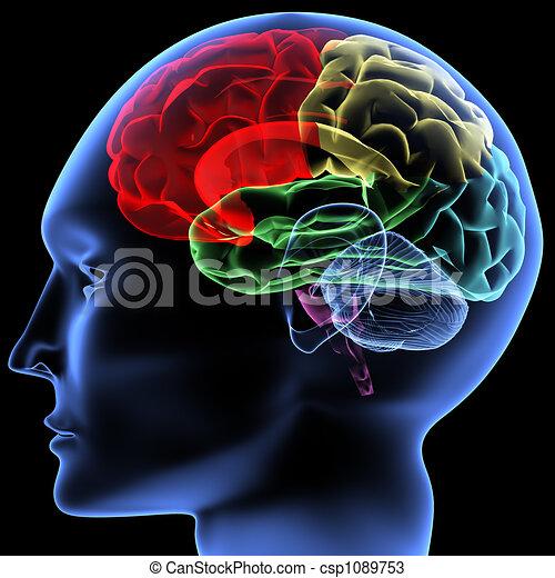 Gehirn - csp1089753