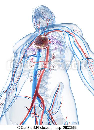 3D zeigt das menschliche Gefäßsystem - csp12633565
