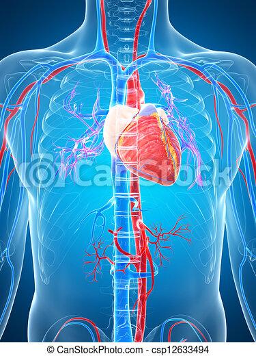 3D zeigt das menschliche Gefäßsystem - csp12633494