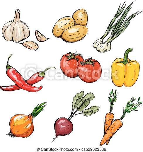 Gemüse bereit. Vector Illustration - csp29623586