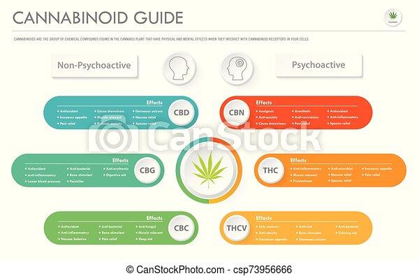geschaeftswelt, infographic, horizontal, führer, cannabinoid - csp73956666