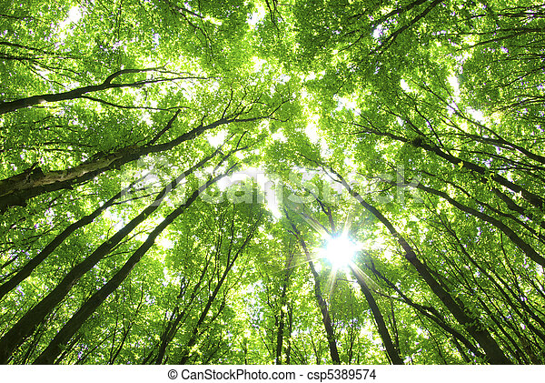 Grüne Bäume im Hintergrund - csp5389574