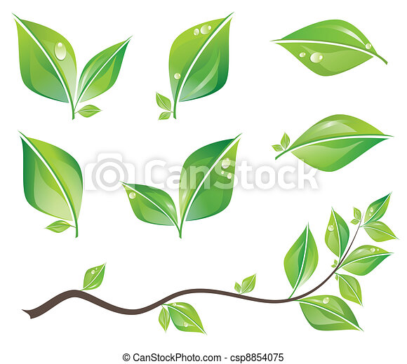 Grüne Blätter bereit - csp8854075