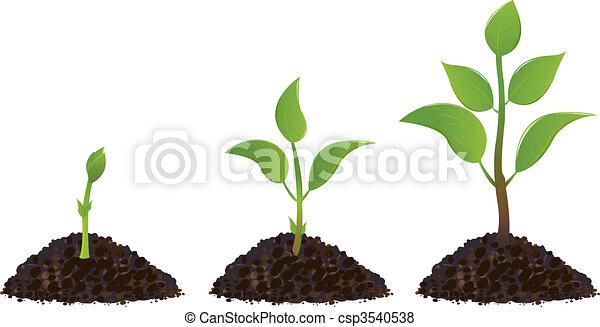 Grüne junge Pflanzen. - csp3540538