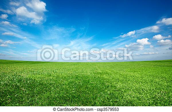 Grünes, frisches Gras unter blauem Himmel. - csp3579553