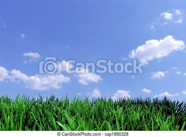 Grünes Gras und blauer Himmel - csp1880328