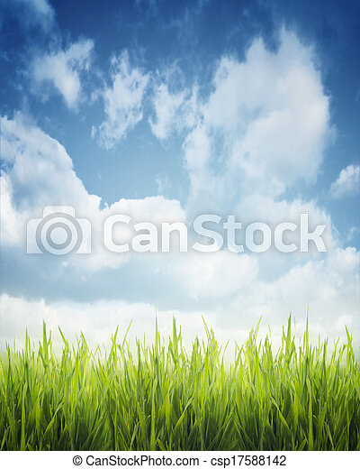 Gras. - csp17588142
