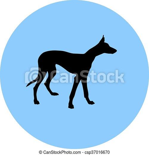 Greyhound. - csp37016670