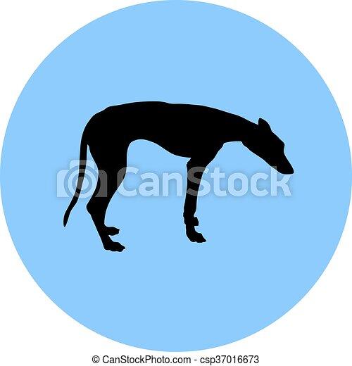 Greyhound. - csp37016673