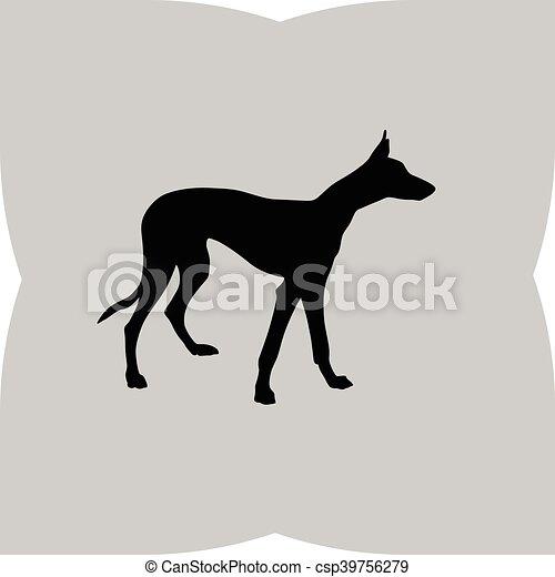 Greyhound. - csp39756279