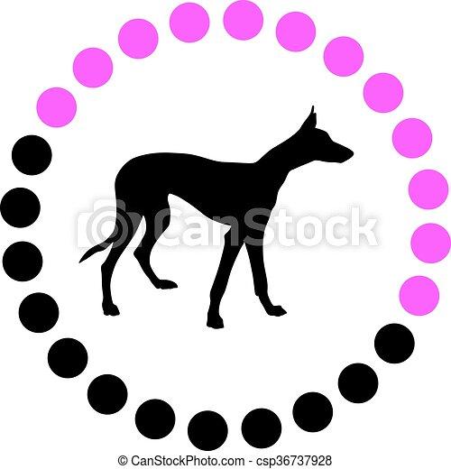Greyhound. - csp36737928