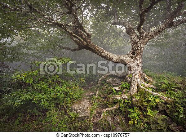 Gruseliger Märchenbaum, unheimlicher Waldnebel Nebel, aalachische NC-Fantasielandschaft in den verrückten Gärten des blauen Bergs in der Nähe von Asheville Nordcarolina - csp10976757