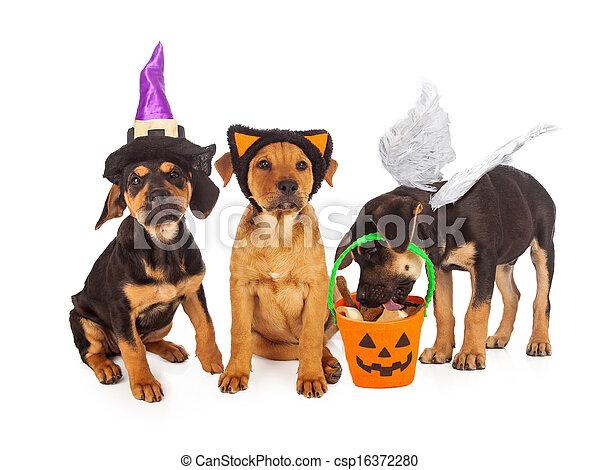 Welpen, angezogen für Halloween - csp16372280