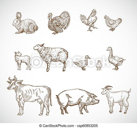 Hand gezeichnete Haustiere. Eine Sammlung von Schwein, Kuh, Ziegen, Lamm und Vögel zeichnen Silhouetten. Gravierende Zeichnungen. Isoliert - csp60853205