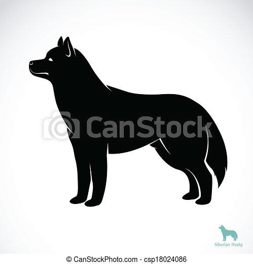 heiser, bild, vektor, hund, sibirisch - csp18024086