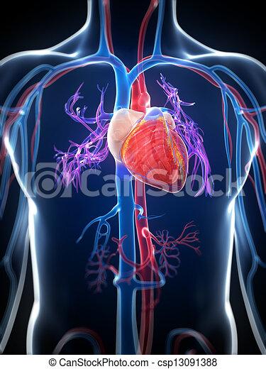 Hochgradiges menschliches Herz - csp13091388