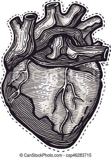 herz, abbildung, hand, vektor, menschliche , gezeichnet - csp46283715