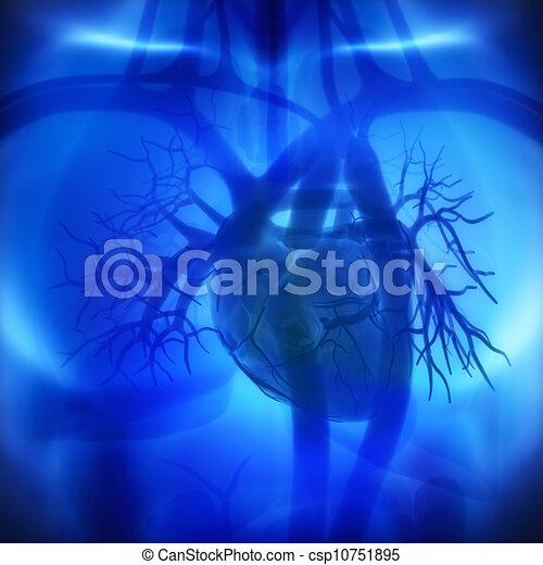 herz, arterien, ventrikel, auricles, koronar, menschliche  - csp10751895