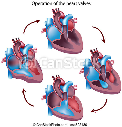 Herzklappenoperation - csp6231801