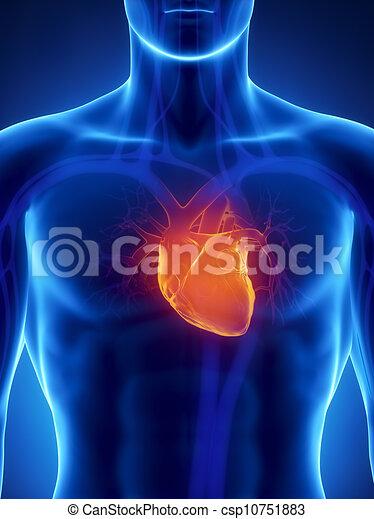 Konzentriert auf das menschliche Herz - csp10751883