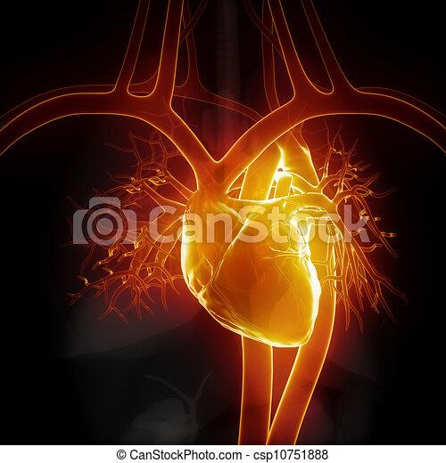 herz, glühen, innere organe - csp10751888