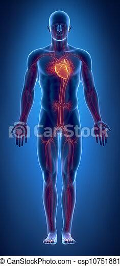 herz, glühen, system, kardiovaskulär - csp10751881