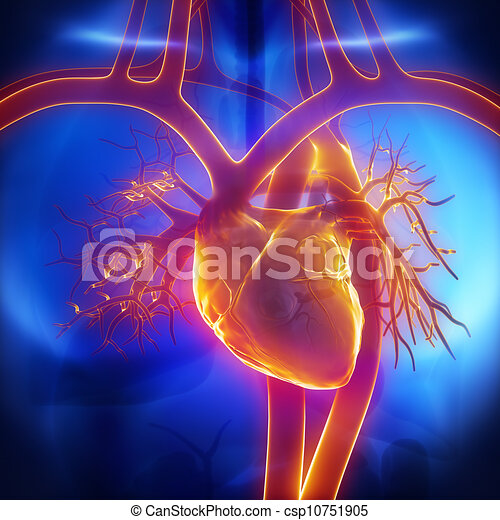 Lungenkoffer, Vene, Aorta im Herzen - csp10751905