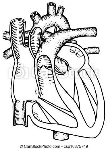 Menschliches Herz - csp10375749