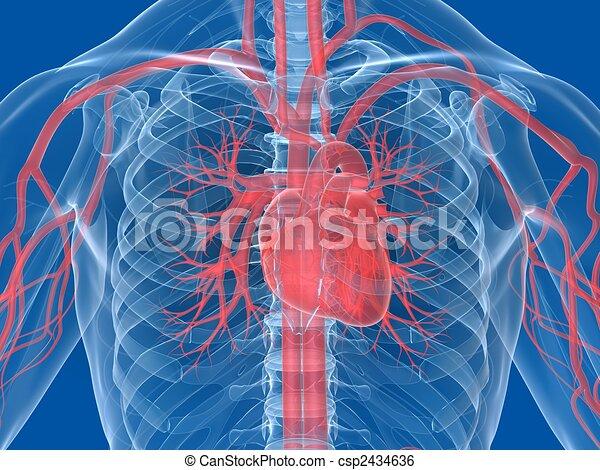 Menschliches Herz - csp2434636
