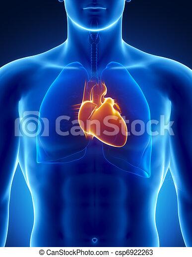 Menschliches Herz mit Thorax - csp6922263