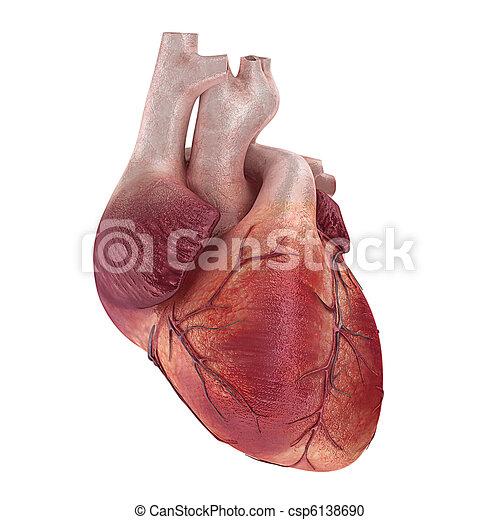 Menschliches Herz - csp6138690
