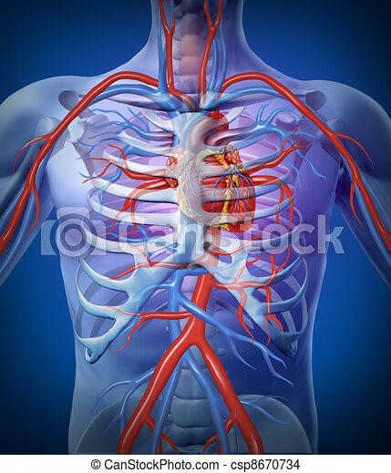 Menschliche Herzzirkulation in einem Skelett - csp8670734
