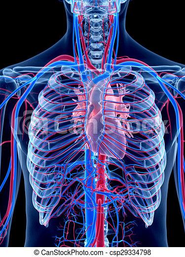 Das Herz - csp29334798