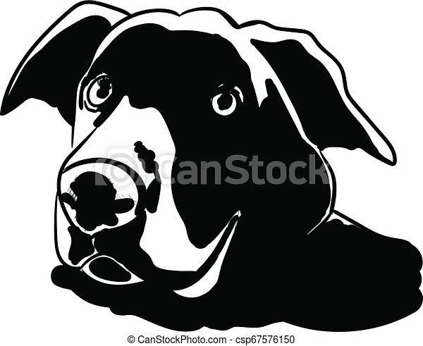 Hund - csp67576150