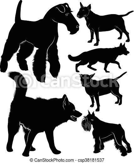 hund, sammlung - csp38181537