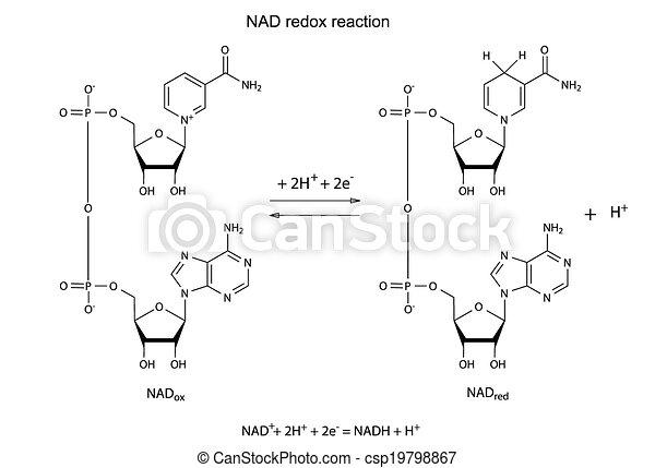 Illustration von NAD Redox. - csp19798867