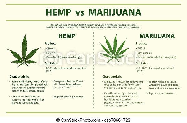 Hemp vs Marihuana vertikal infographic - csp70661723