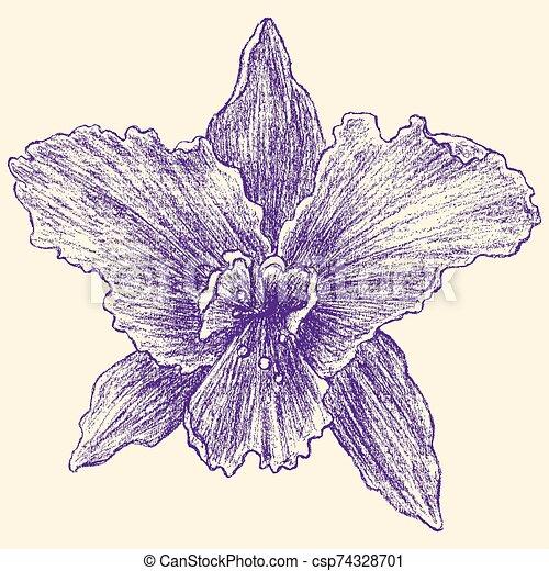 iris - csp74328701