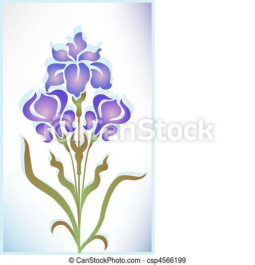 Iris - csp4566199