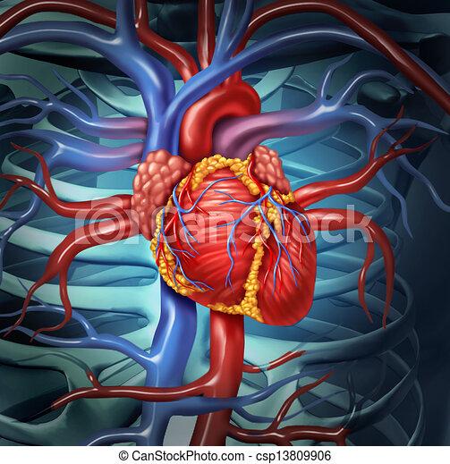 Herz-Kreislauf-Herz - csp13809906