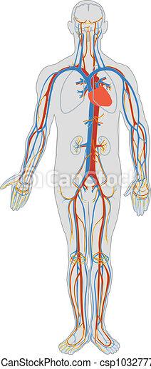 Menschlicher Körper und Blutkreislauf - csp10327779