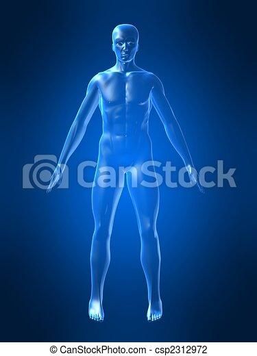 koerper, form, menschliche  - csp2312972