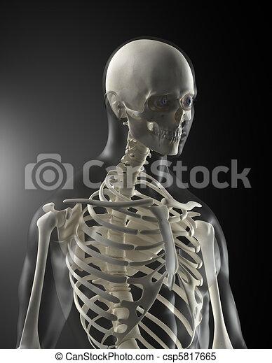 Medizinischer menschlicher Körper - csp5817665