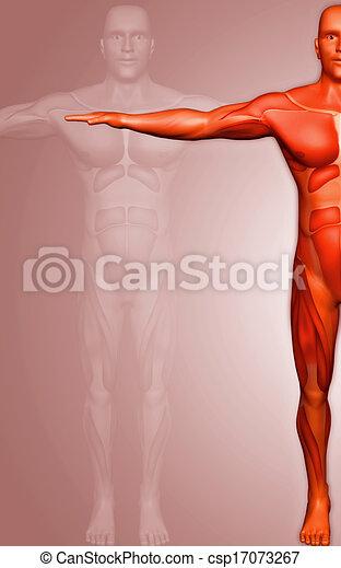 Menschlicher Körper - csp17073267