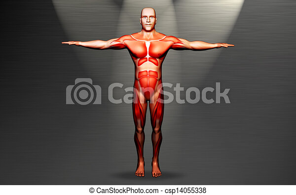 Menschlicher Körper - csp14055338