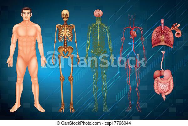 Menschliche Körpersysteme - csp17796044