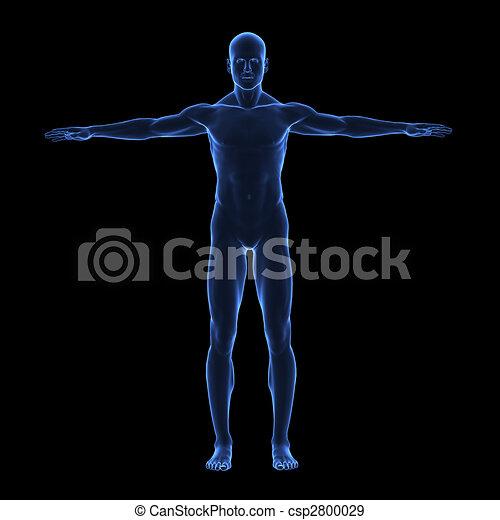 koerper, x, menschliche , strahl - csp2800029